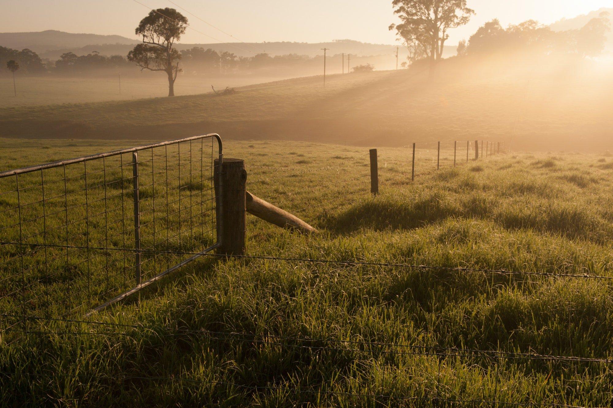 Farm gate on a foggy morning